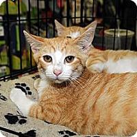 Adopt A Pet :: Flannigan - Farmingdale, NY