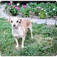 Adopt A Pet :: Jenny Craig - Shawnee Mission, KS