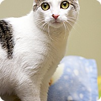 Adopt A Pet :: Lucy - Island Park, NY