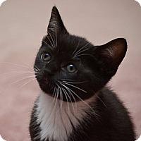 Adopt A Pet :: Oscar - Reston, VA