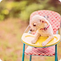 Adopt A Pet :: Juicy Fruit - Austin, TX