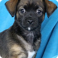 Adopt A Pet :: Aria - Minneapolis, MN