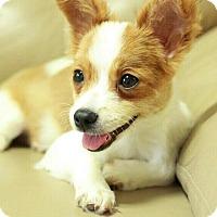 Adopt A Pet :: Jenny - Buena Park, CA