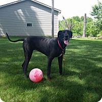 Adopt A Pet :: Chloe - Baden, PA