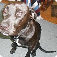 Adopt A Pet :: Blackie - Woodland, CA