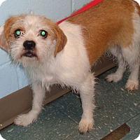 Adopt A Pet :: Destiny - Orlando, FL