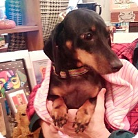 Adopt A Pet :: Sadie Elizabeth - Portland, OR