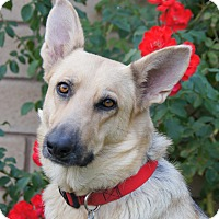 Adopt A Pet :: Geneva von Gen - Thousand Oaks, CA