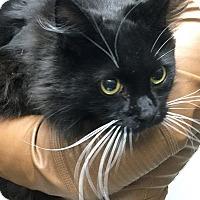 Adopt A Pet :: Bentley - Webster, MA