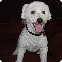 Adopt A Pet :: Willy - Pardeeville, WI