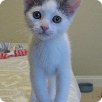 Adopt A Pet :: Bixler - North Highlands, CA