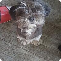Adopt A Pet :: Abagail - Lorain, OH