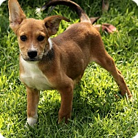 Adopt A Pet :: Lane - Allentown, PA