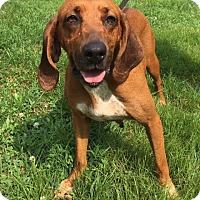 Adopt A Pet :: Annie - Sparta, NJ