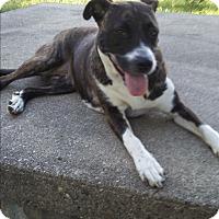 Adopt A Pet :: Megs - Detroit, MI