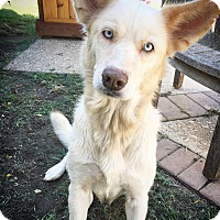 Adopt A Pet :: Aubrey - Fredericksburg, TX