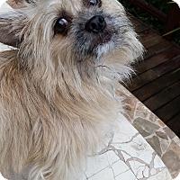 Adopt A Pet :: Ollie - West Linn, OR
