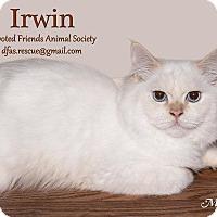 Adopt A Pet :: Irwin - Ortonville, MI
