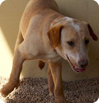 Hound (Unknown Type)/Shepherd (Unknown Type) Mix Dog for adoption in Von Ormy, Texas - Max