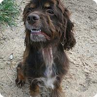 Adopt A Pet :: Waylon - Jamestown, TN