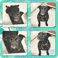 Adopt A Pet :: MONTLEY - Kenansville, NC