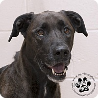 Adopt A Pet :: Milo - Troy, OH