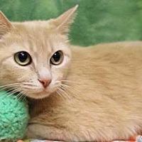 Adopt A Pet :: Magrit - mishawaka, IN