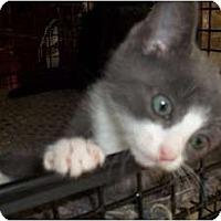 Adopt A Pet :: Maitai - Acme, PA