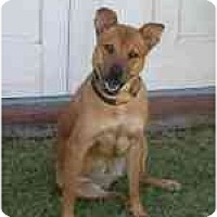 Adopt A Pet :: Shoobie - Scottsdale, AZ