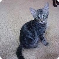 Adopt A Pet :: Fleur - Lantana, FL
