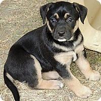 Adopt A Pet :: Vadera - La Habra Heights, CA