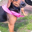 Adopt A Pet :: Casey-REDUCED ADOPTION FEE