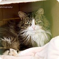 Adopt A Pet :: Lulu - Island Park, NY
