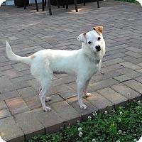 Adopt A Pet :: Mila - Homewood, AL
