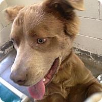 Adopt A Pet :: Hank - Flemington, NJ