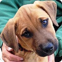 Adopt A Pet :: Parrett - Pleasant Plain, OH