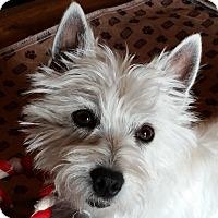 Adopt A Pet :: Hillary - Omaha, NE
