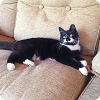 Adopt A Pet :: Spark - Tampa, FL