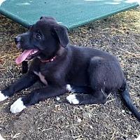 Adopt A Pet :: BUTTERCUP  *Courtesy Posting* - Santa Rosa, CA