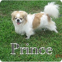 Adopt A Pet :: Prince - Greensboro, MD