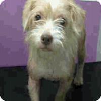 Adopt A Pet :: Iris - Fort Collins, CO