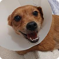 Adopt A Pet :: Piglet - Mount Gretna, PA