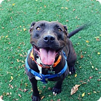 Adopt A Pet :: Kaia Carson - Cedar Rapids, IA