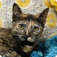 Adopt A Pet :: Nala $45 Female - knoxville, TN