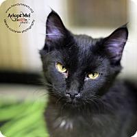 Adopt A Pet :: Demetri - Lyons, NY