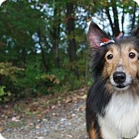 Adopt A Pet :: Claire - New Castle, PA
