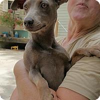 Adopt A Pet :: Megan - Baileyton, AL