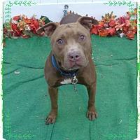 Adopt A Pet :: HEMI - Marietta, GA