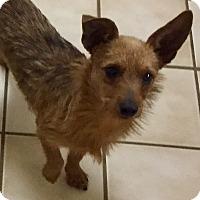 Adopt A Pet :: Artie - Vancouver, BC
