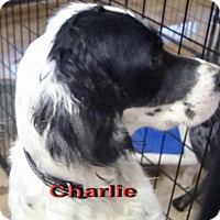Adopt A Pet :: Charile - Coleman, TX